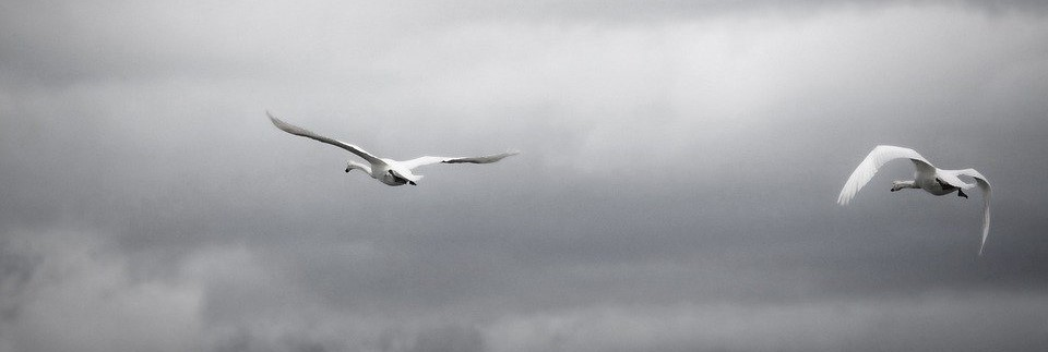 лебеди в небе