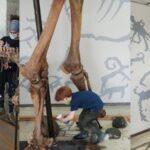 Кости новосибирских мамонтов помыли в музее
