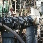 Новосибирец возмутился беспорядком на Заельцовском кладбище