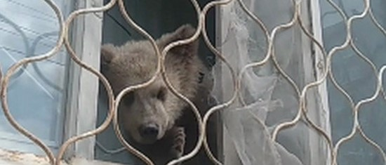 Медвежонок в окне
