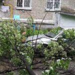 дерево упало на машины