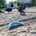 маска и голуби