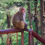 15 обезьян с сертификатом и без паразитов ищет новосибирский «Вектор» для своих исследований
