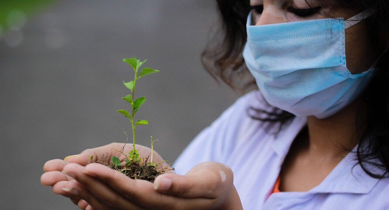 посади свой лес