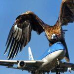 птица таранит самолёт