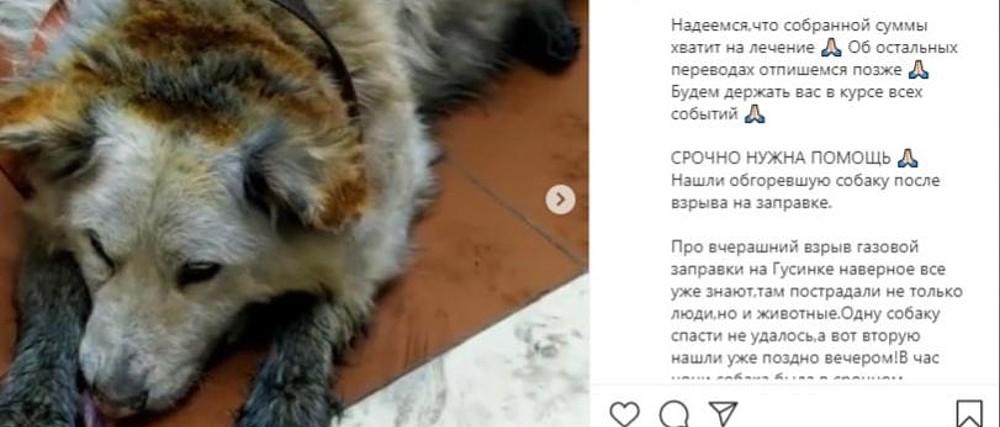 собака, пострадавшая при взрыве на АЗС