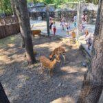 зоопарк олени