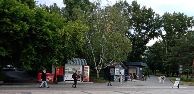 набережная, деревья, лето