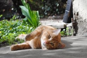 кот, тепло, лето