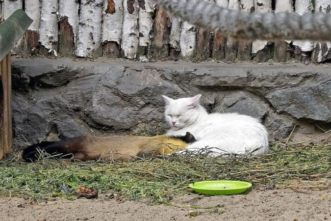 харза и кошка