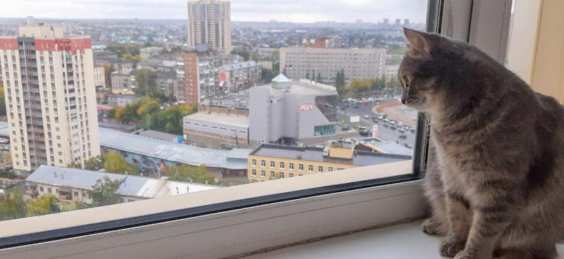 Новосибирск погода кошка