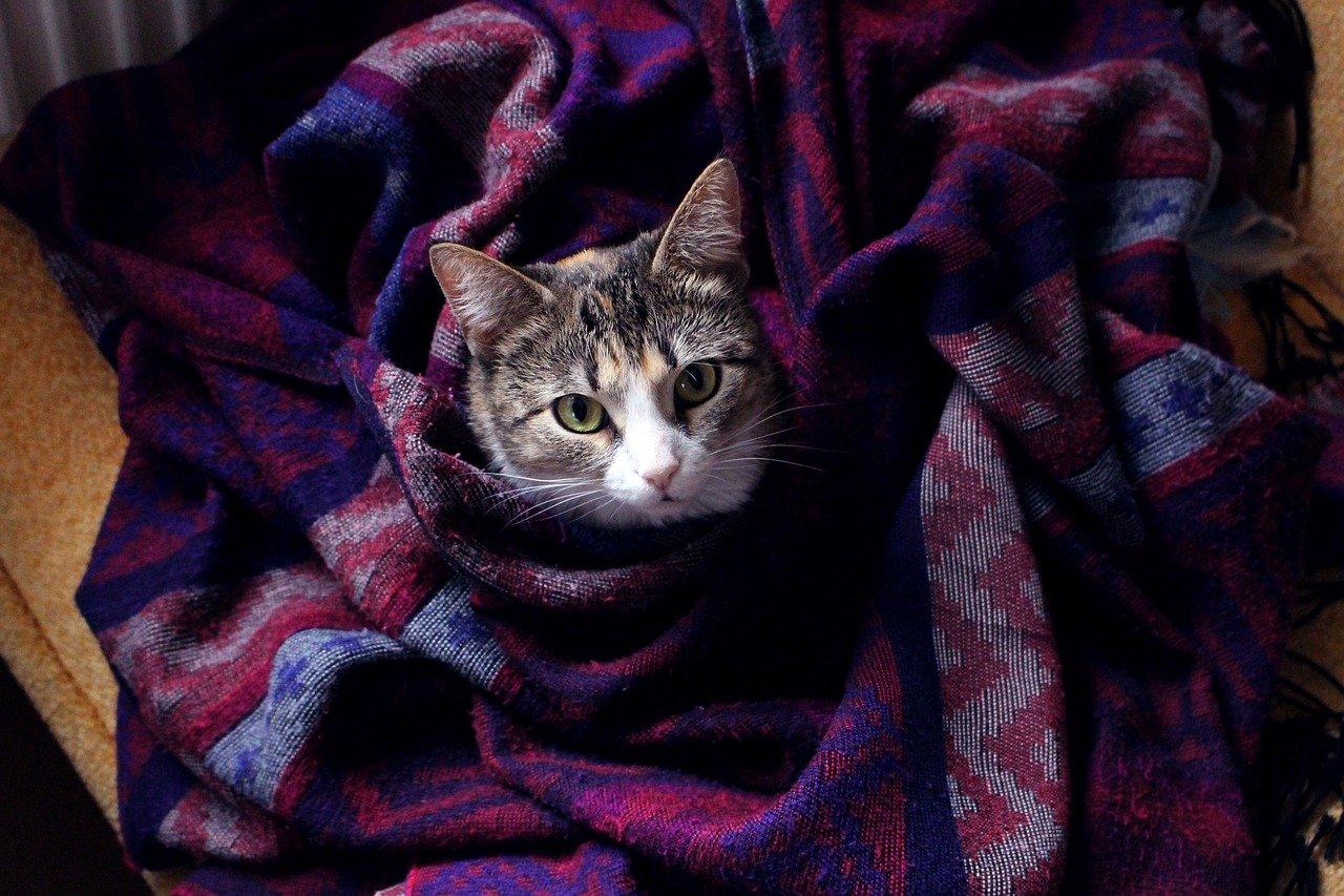 кот плед холод