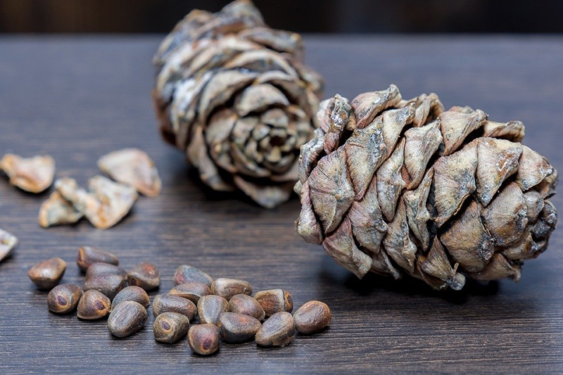 орехи, кедровые